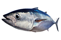 Коллаген рыбный