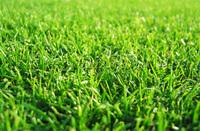 Отдушка Травяная свежесть
