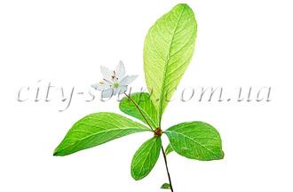 Лечебные, косметические свойства эфирных масел.  Grushanka%28ready%29.330x330