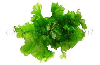 Морских водорослей экстракт