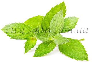 Лечебные, косметические свойства эфирных масел.  Myata-pol%28ready%29.330x330