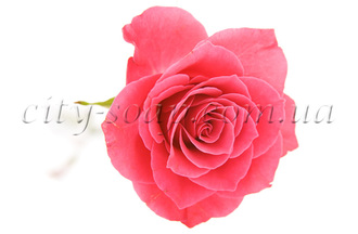 Розы гидролат