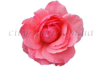 Отдушка Чайная роза
