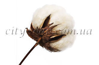 Масло Хлопковых семян