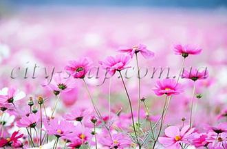 Отдушка Цветочная поляна