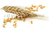 Пшеницы экстракт
