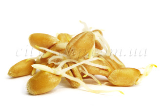 СО2 экстракт Зародышей пшеницы: со2 экстракты - 1 | city-soap.com.ua