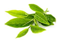 Твердые базовые масла Масло Зеленого чая (баттер) - 10 | city-soap.com.ua